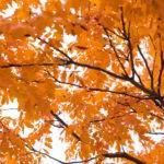 Potrzebny zastrzyk energii na jesień?
